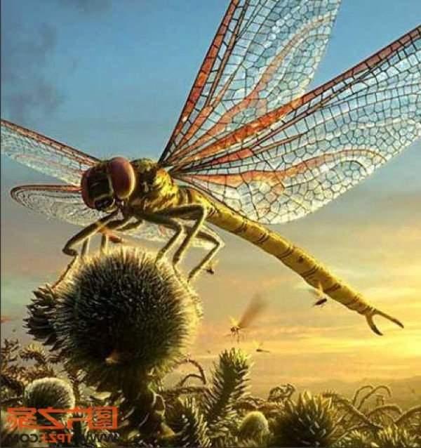 гигантская стрекоза
