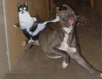 беспощадные животные