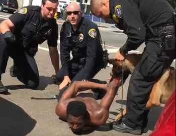 полицейская собака кусает мужчину