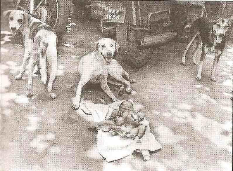 три собаки возле ребенка