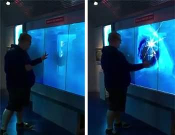 акула налетела на стекло