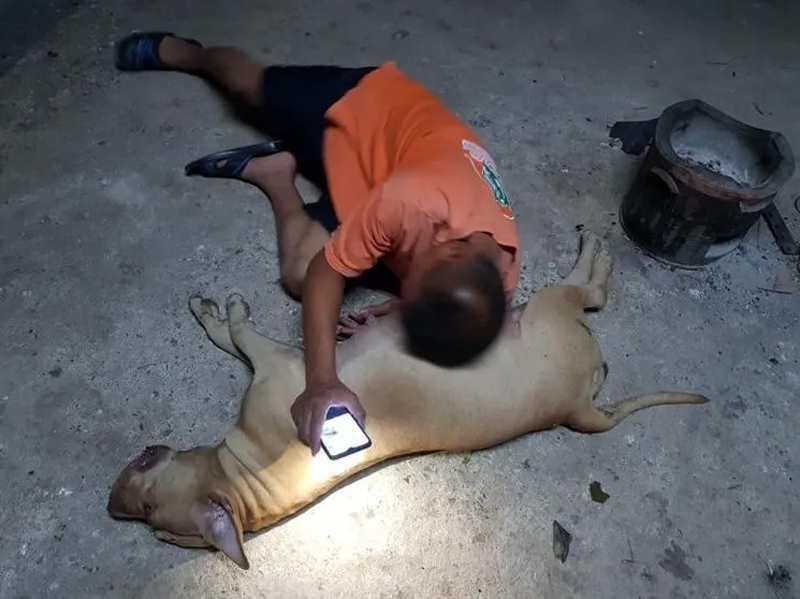 хозяин скорбит по собаке