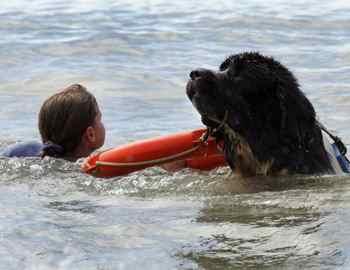 собака спасает тонущую девочку