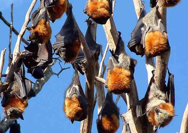 сидят летучие мыши