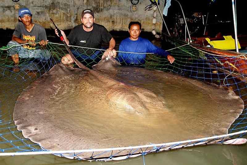 пресноводный скат с рыбаками