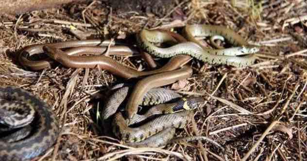 африканские змеи