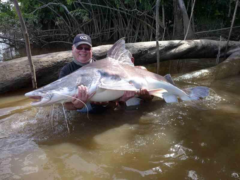 рыбак поймал пираибу