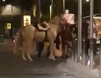 лошадь покусала полицеского