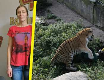 зверское нападение тигра