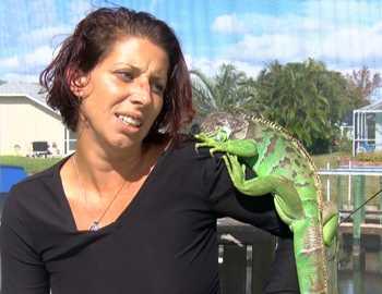 игуана напала на женщину