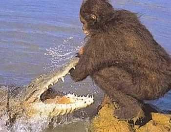 крокодил напал на древнего человека