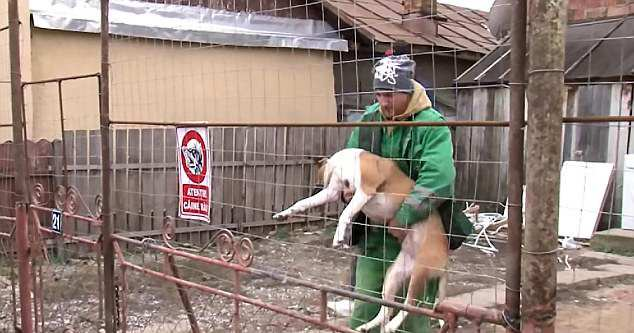 одна из нападавших собак