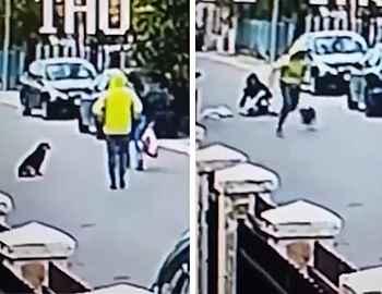 собака защитила женщину от грабителя