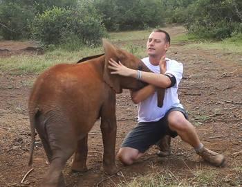 слоненок напал на мужчину