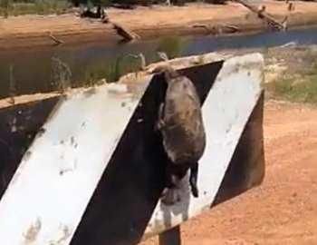 убитая черепаха