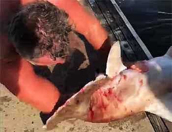 акула заглотила руку мужчины
