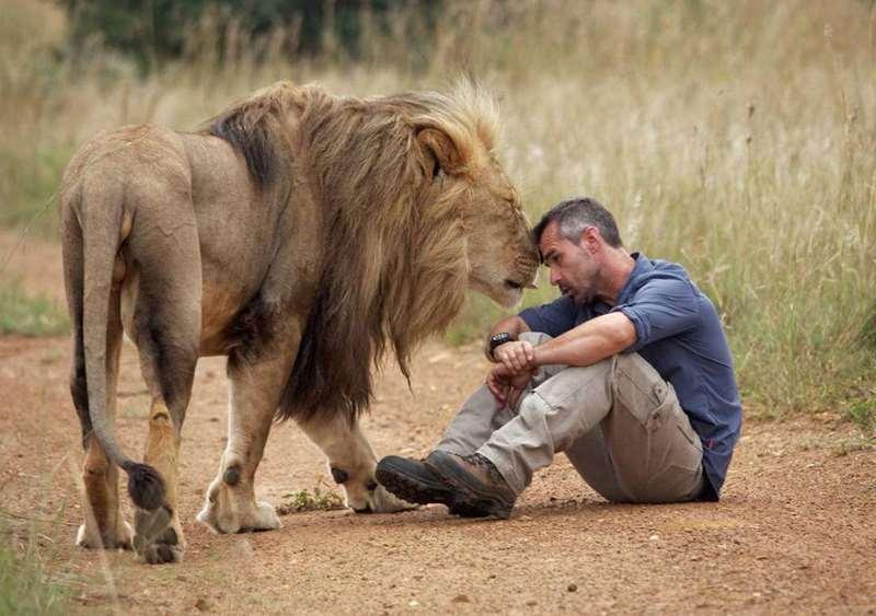 Кевин и его лев