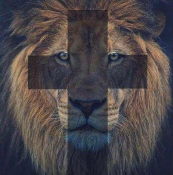 скорбь из-за льва