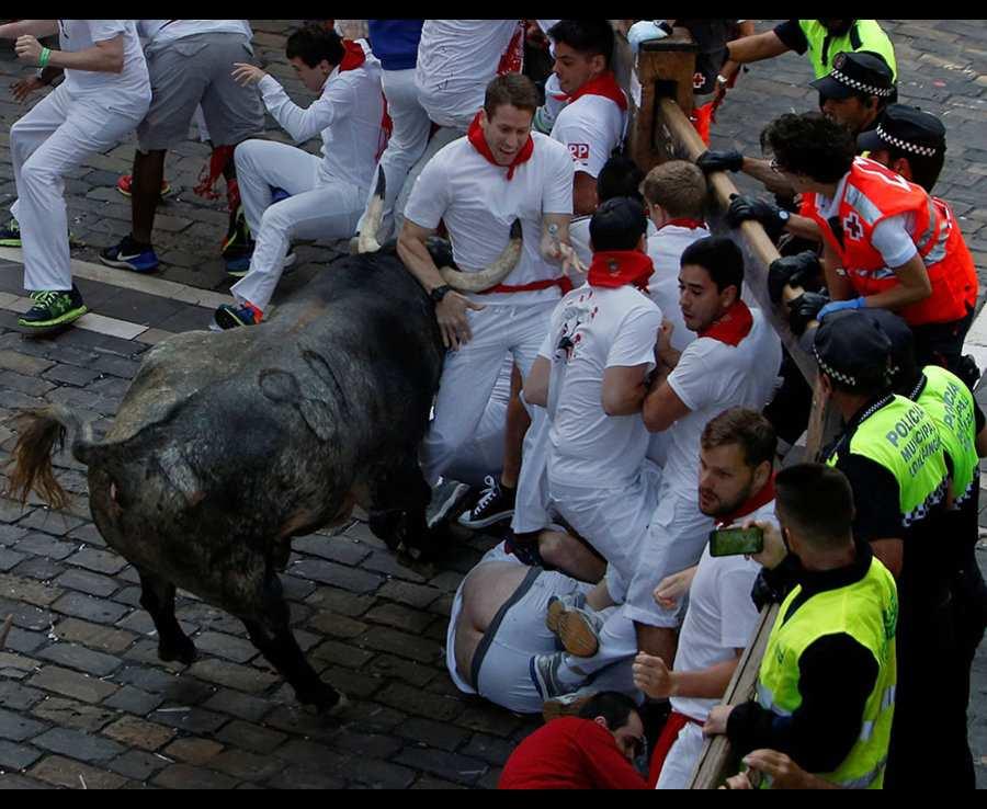 в перемешку с быками