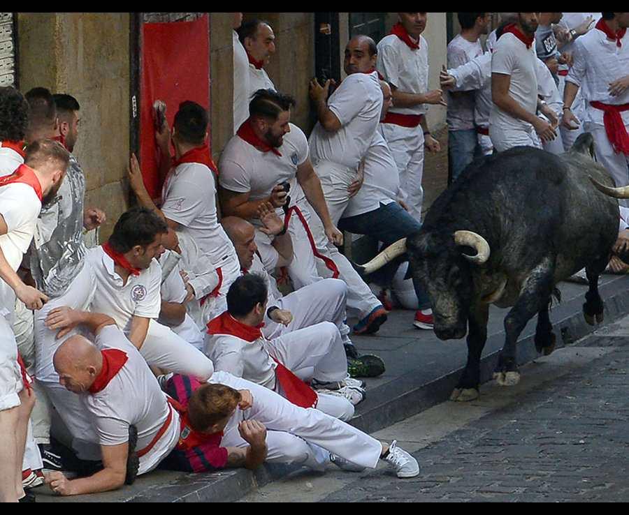 бык против мужчин