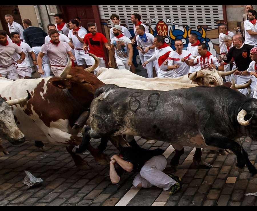 быки мчутся над мужчиной
