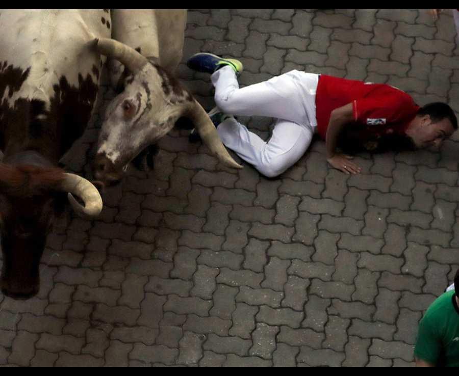 мужчина отползает от быков