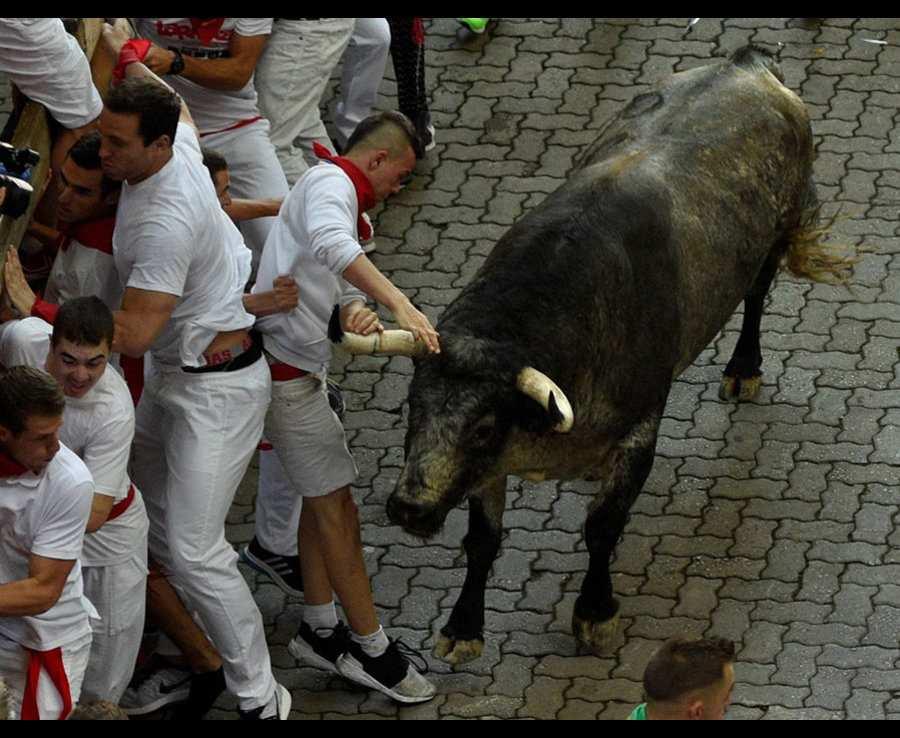 бык промазал рогами