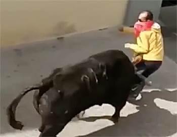 бык убил мужчину