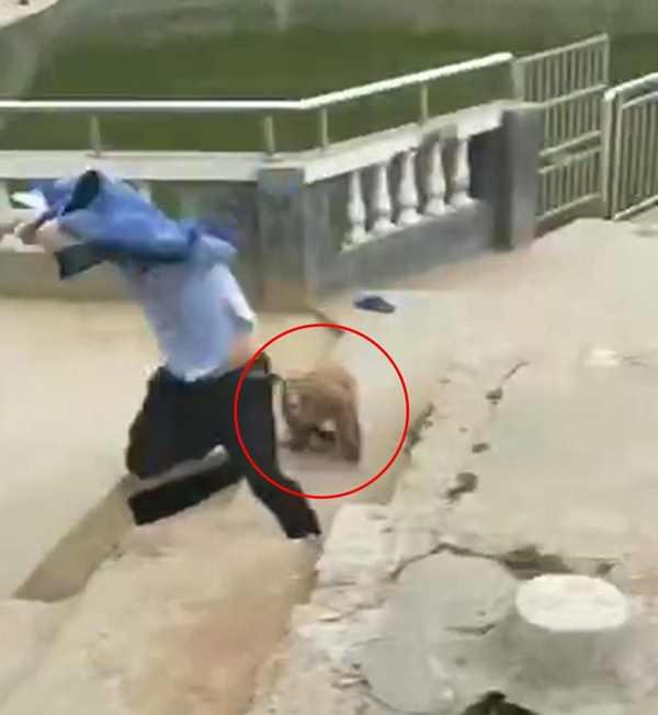 обезьяна гонится за парнем