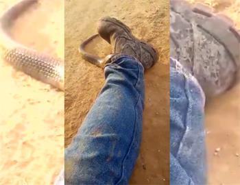змея в штанах мужчины