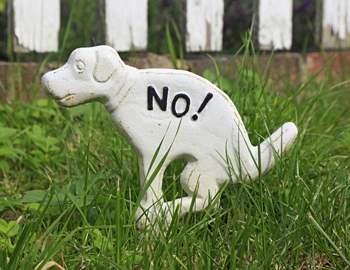 знать запрета какать собакам