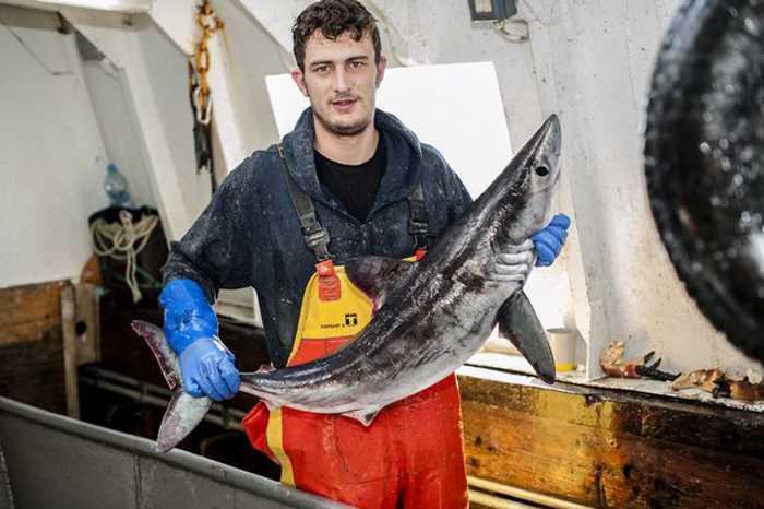 рыбака укусила редкая акула