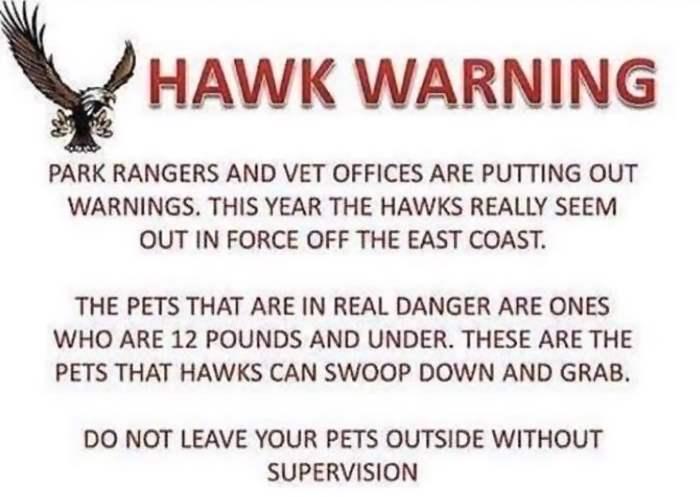ястреба нападают на собак