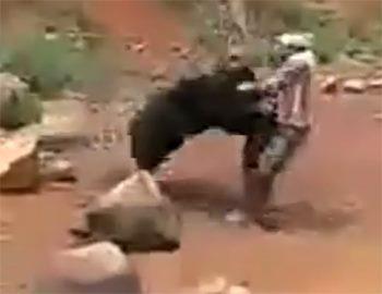 медведь набрасывается на мужчину