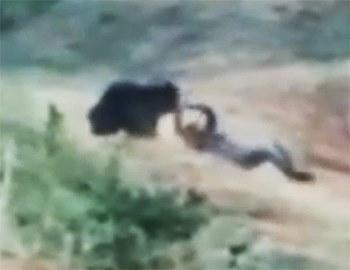 смерть во время селфи с медведем