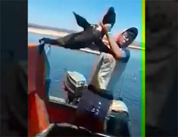 парень избивает морского котика