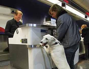 собака перед перелетом в самолете