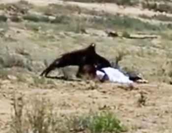 беркут напал на девочку