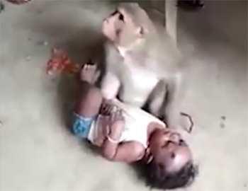обезьяна украла ребенка