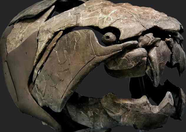 массивная голова Дунклеостея