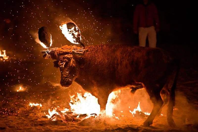 бык с горящими рогами