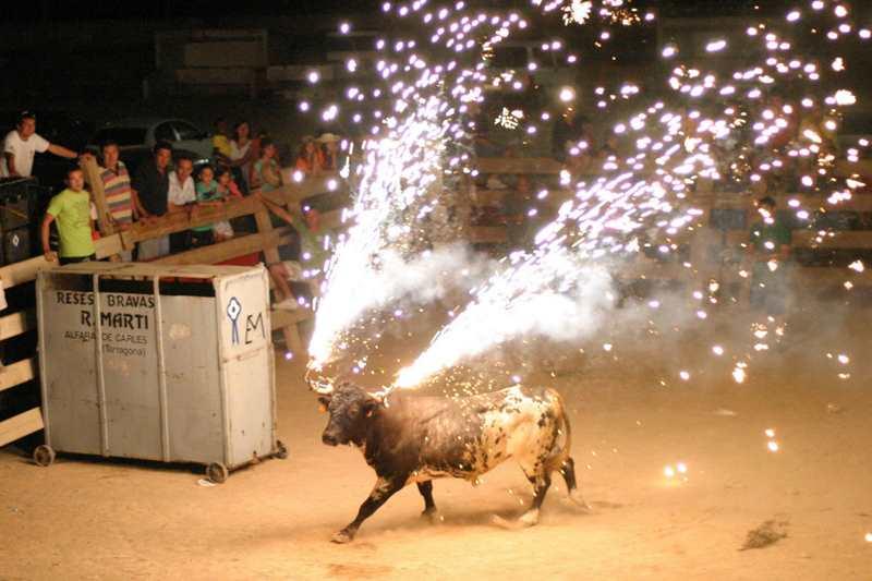 бык с подожженными рогами