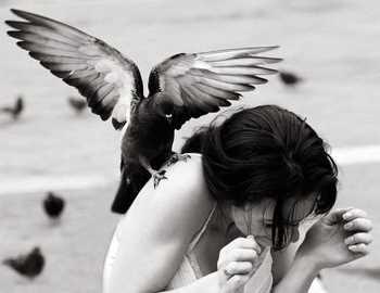 голубь напал на женщину
