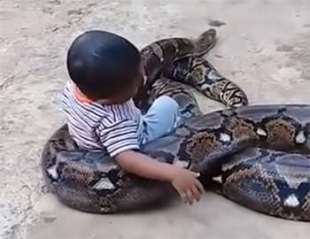 мальчик играет с питоном