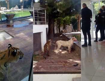 домашние кошачьи напали на мужчину