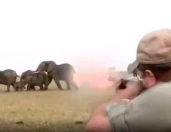 охотник стреляет в слона