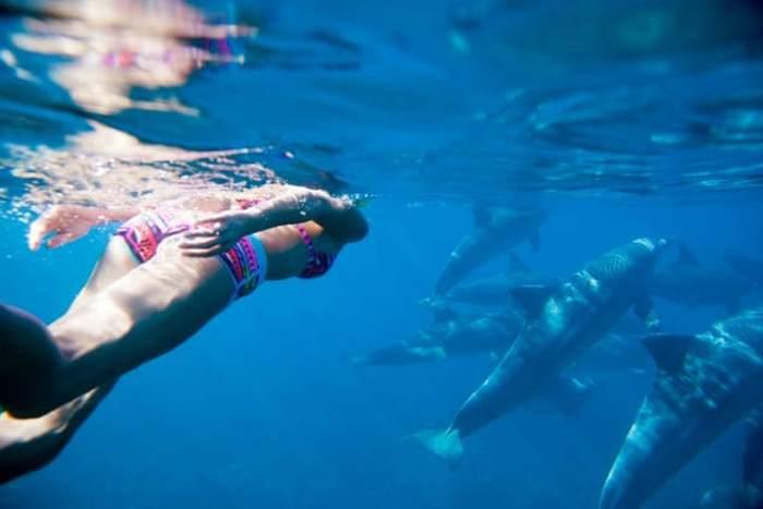 девушка плывет за дельфинами