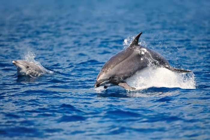 няряют дельфины