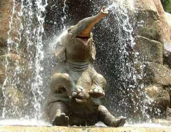 купается слон