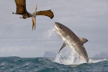 акула охотится на летающего ящера